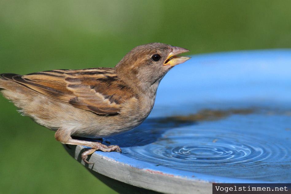 Geliebte Vogeltränke & Vogelbad im Garten - Tipps und Informationen @YF_82