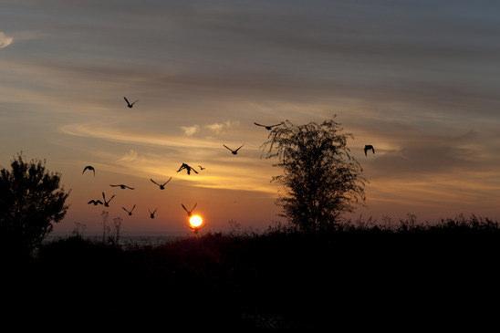 welcher vogel singt morgens als erster